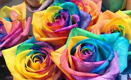 цветные розы, радужные розы, необычные розы, необчыные цветы